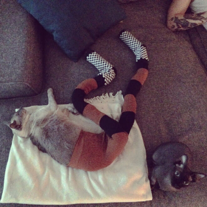 cats in tights 12 (1)
