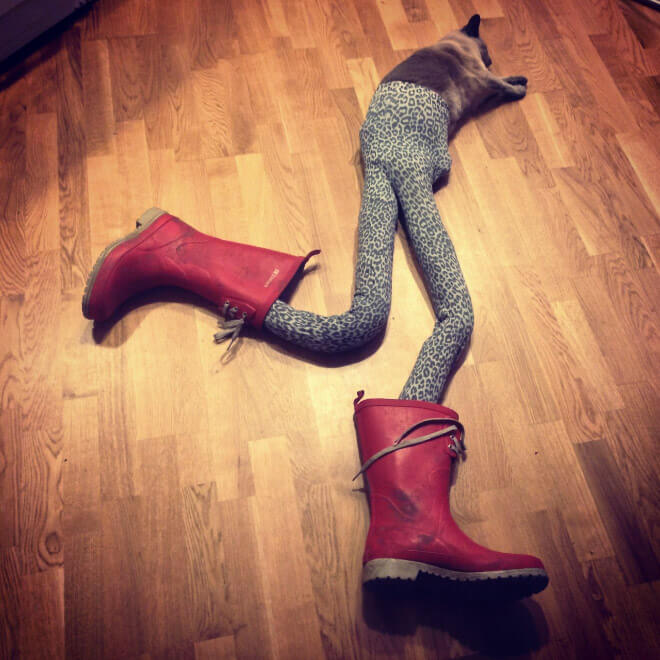 cats in tights 14 (1)