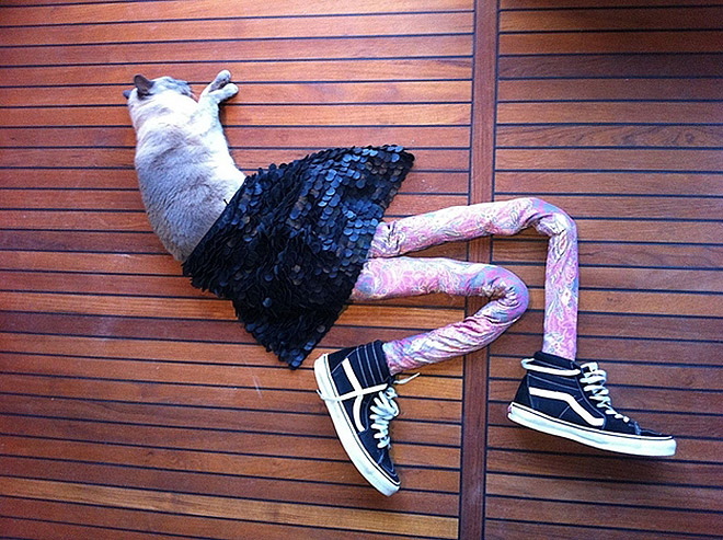 cats in tights 17 (1)