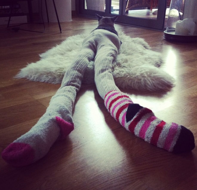 cats wearing stockings 6 (1)