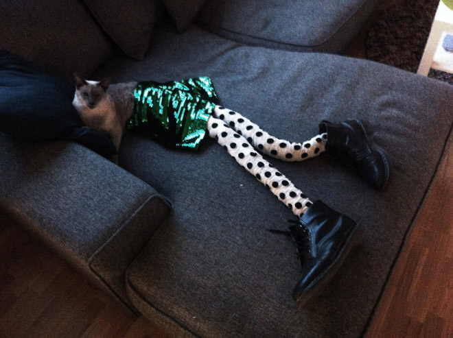cats wearing stockings 7 (1)