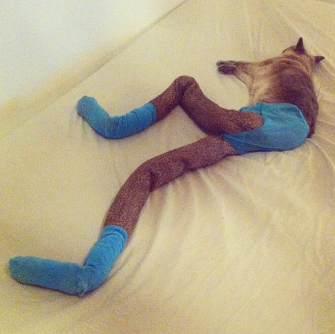 cats in tights 9 (1)