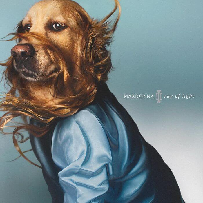 madonna album covers recreated by dog 1a (1)
