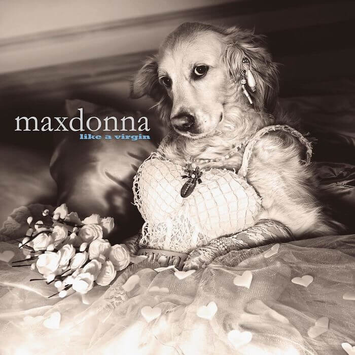 maxdonna album covers recreated by dog 4a (1)
