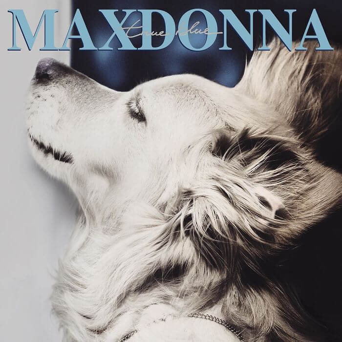 maxdonna album covers recreated by dog 6a (1)