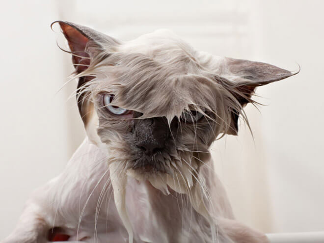 angry cat pictures 6 (1)