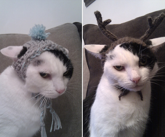 angry cat pictures 8 (1)