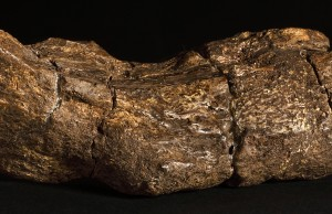 the-oldest-largest-poo-in-the-world