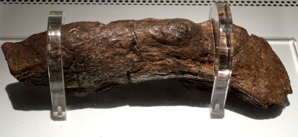 the-oldest-poo-in-the-world