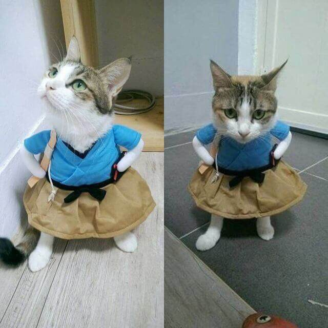 this is my life meow 1 (1)