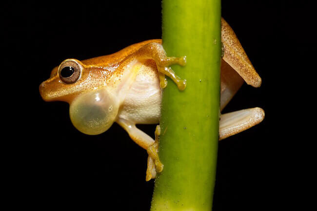 why do frogs croak at night - frog on a branch (1)