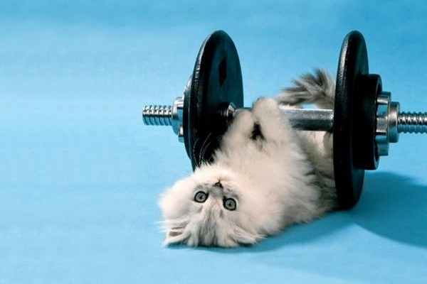 cute-motivation-pets-working-out