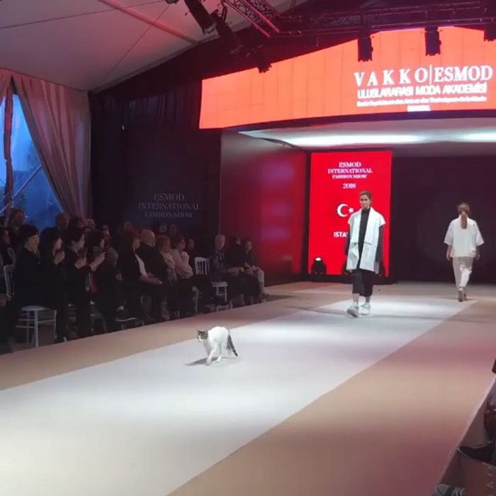 cat-steals-the-fashion-show