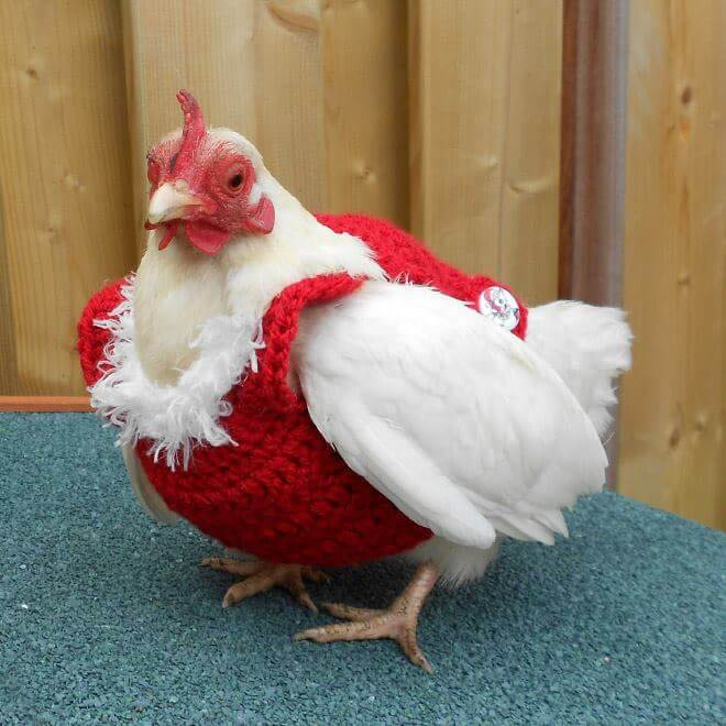 chicken-fashion-winter-2018