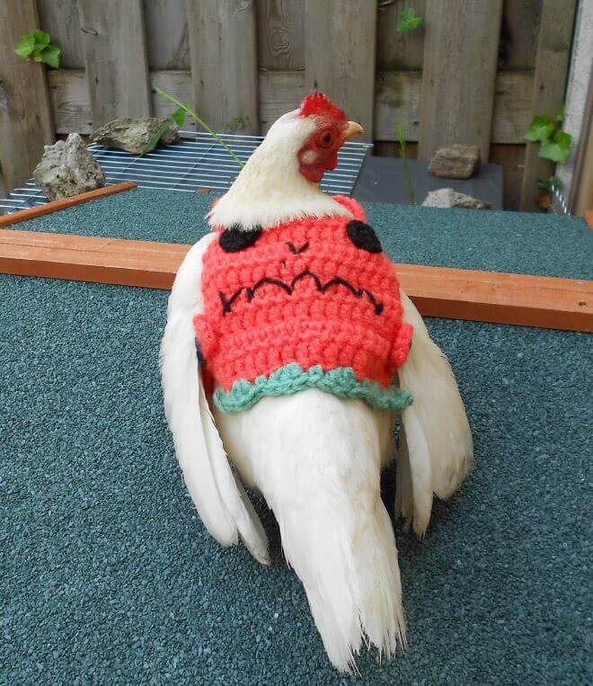chicken-fashion-winter-2018_14