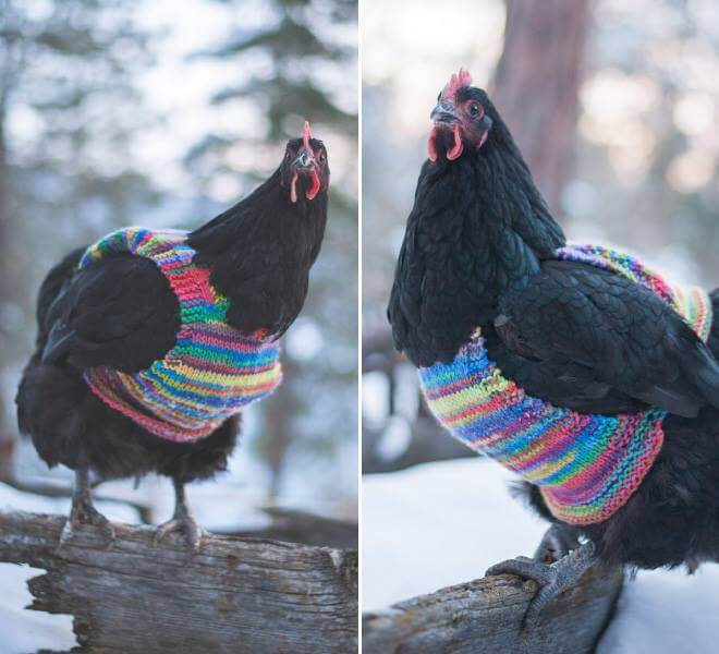 chicken-fashion-winter-2018_15