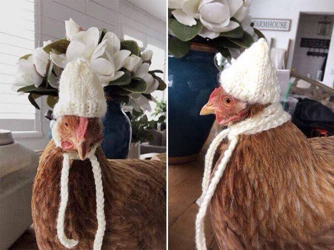 chicken-fashion-winter-2018_5