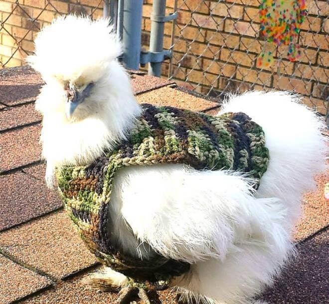 chicken-fashion-winter-2018_7
