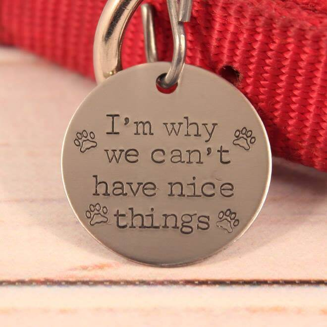 hilarious-dog-collar-tags12