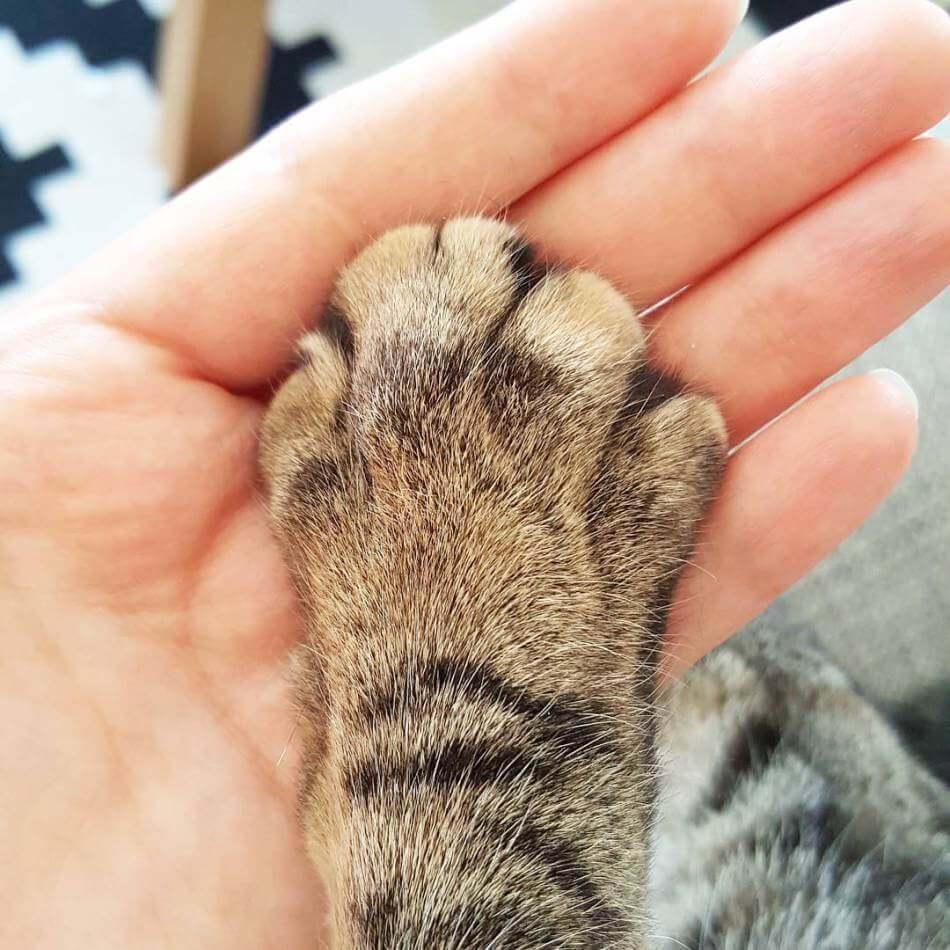 milestones-for-cat-owners