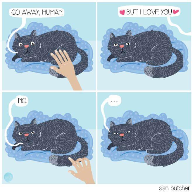 milestones-for-cat-owners10