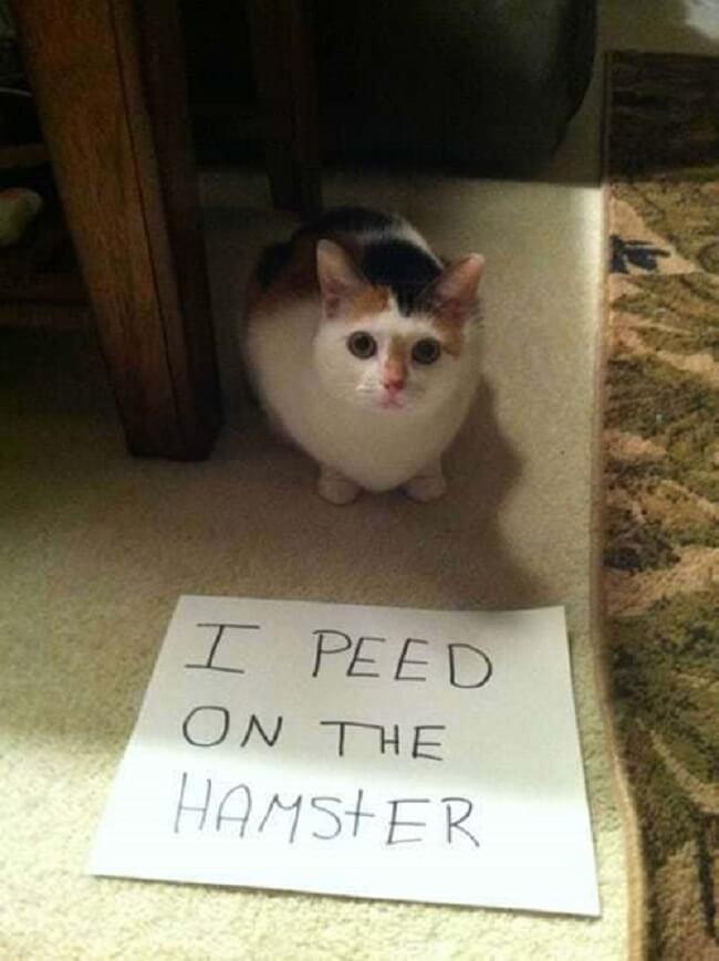 milestones-for-cat-owners11