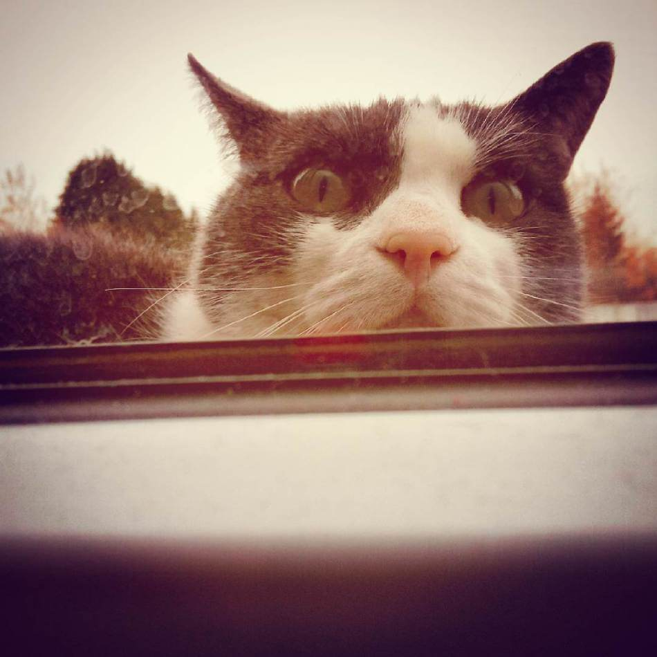 milestones-for-cat-owners14
