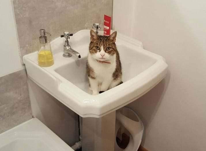 milestones-for-cat-owners21