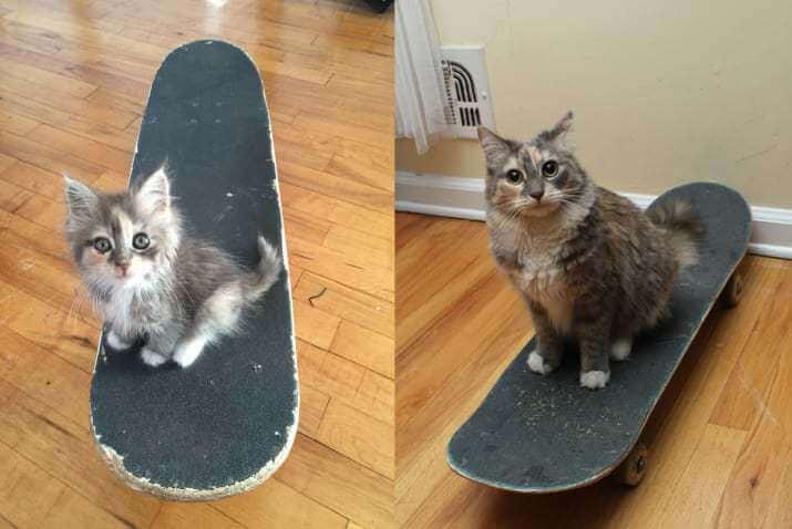 milestones-for-cat-owners7