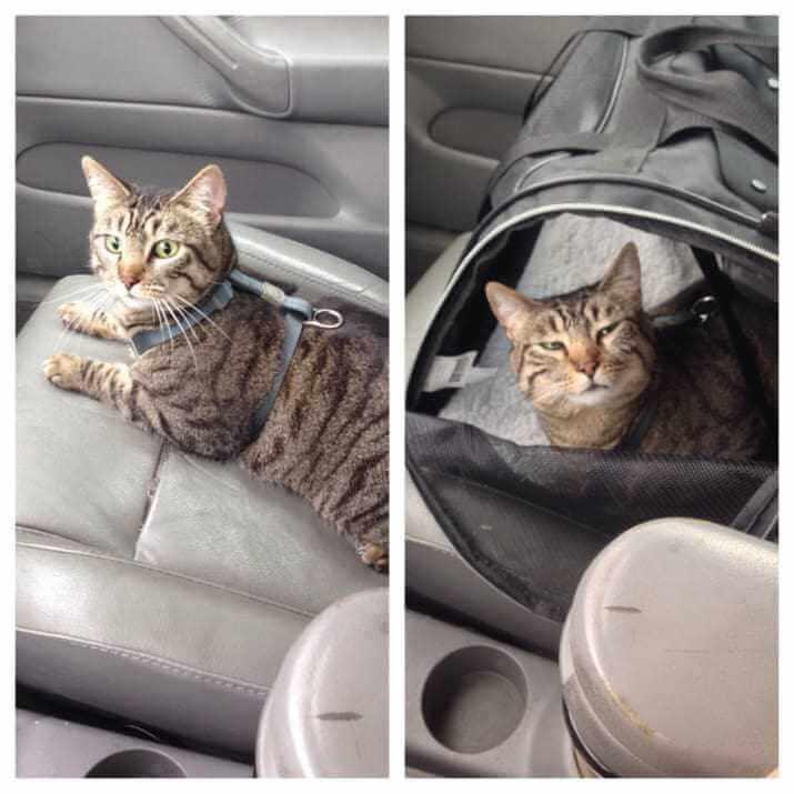 milestones-for-cat-owners8