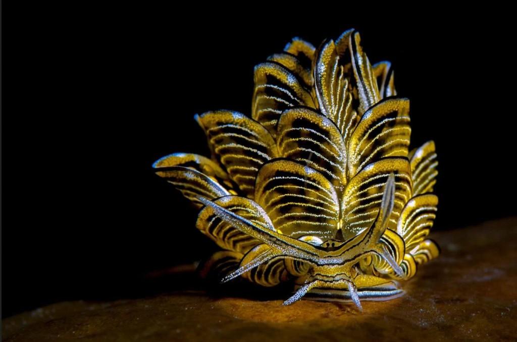 12 Photos of Majestic Marine Creatures
