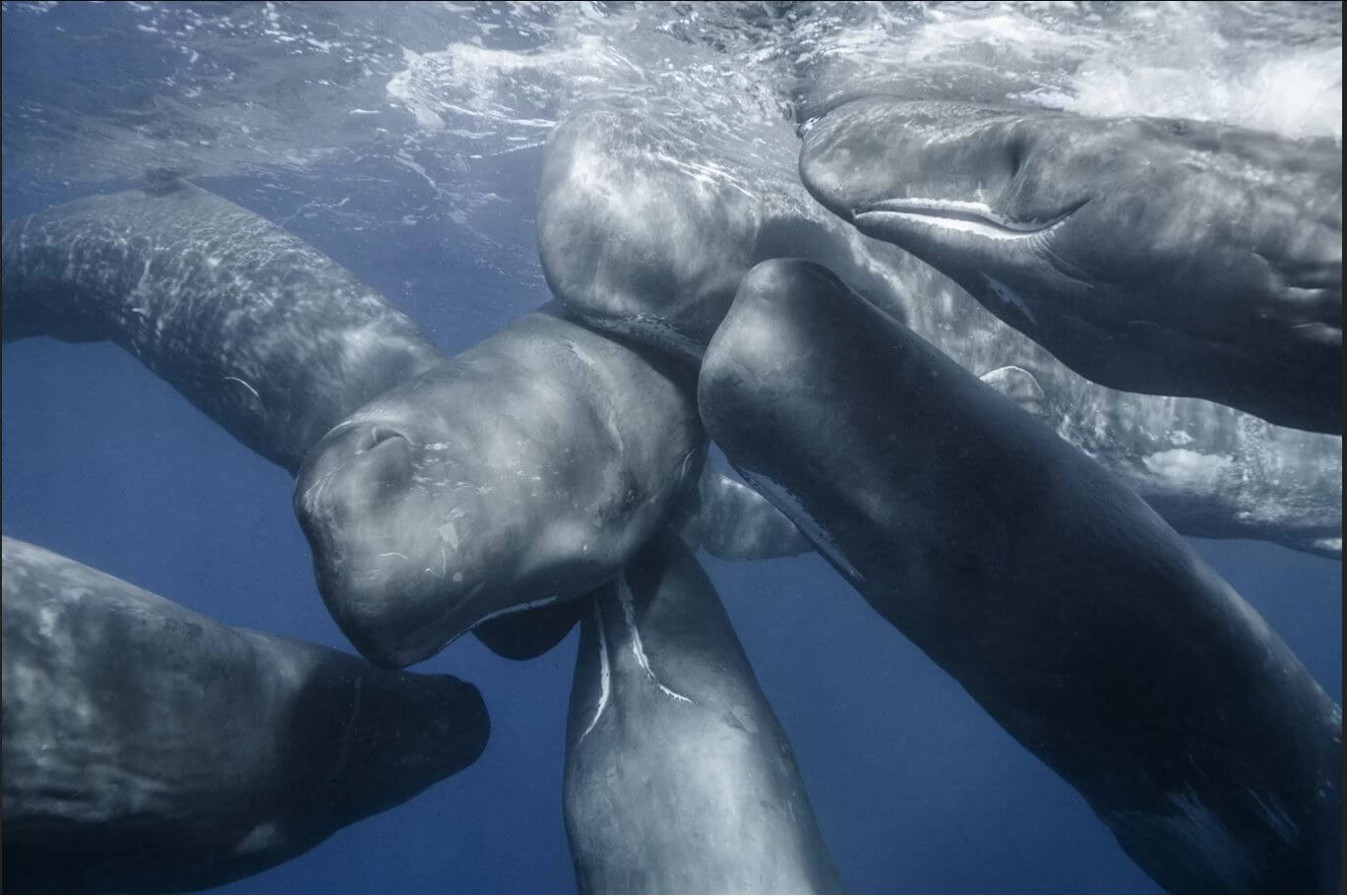 majestic-marine-creatures-photos