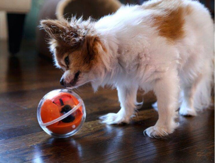 gadgets for pets