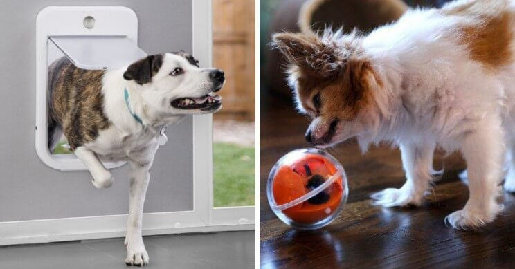 8 Gadgets for pets that you need to see