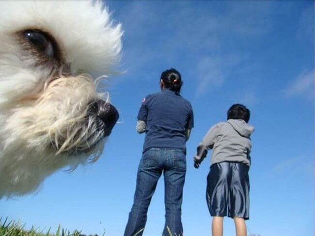 funniest dog photobombs
