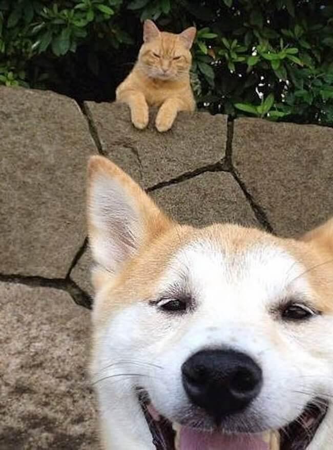 funniest dog photobombs