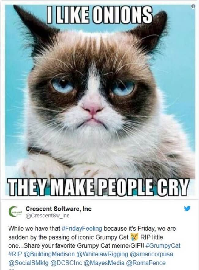 best grumpy cat memes