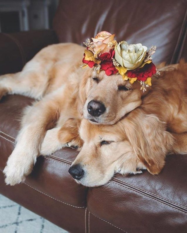 floral crowns for animals