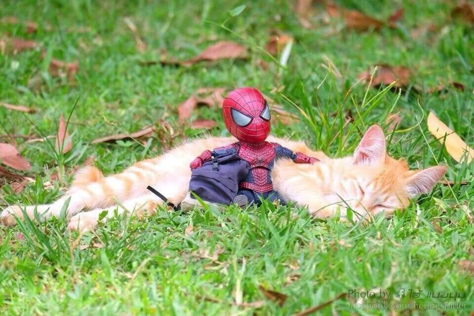 Spider-Man and the cute kitten 11