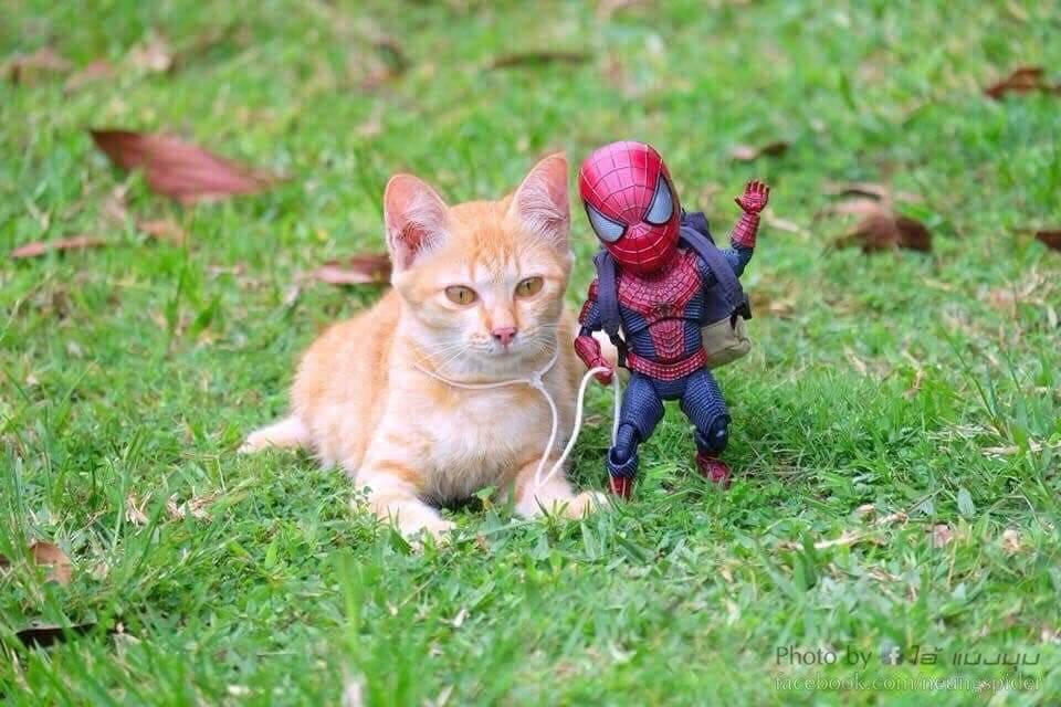 Spider-Man and the cute kitten 16