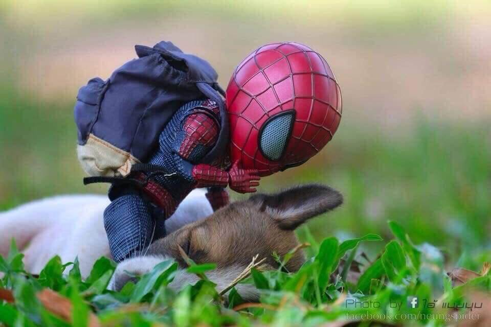Spider-Man and the cute puppy
