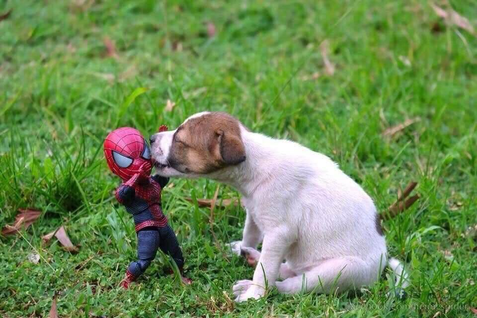 Spider-Man and the cute puppy 2