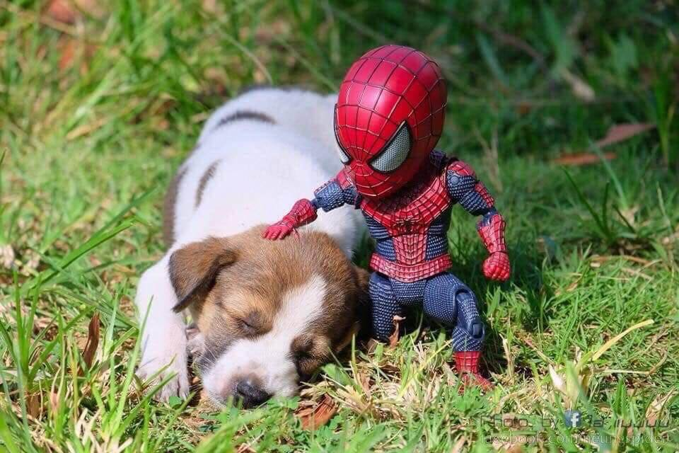 Spider-Man and the cute puppy 3