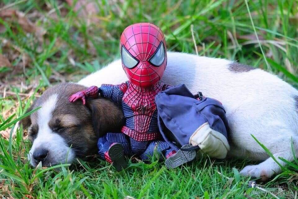 Spider-Man and the cute puppy 5