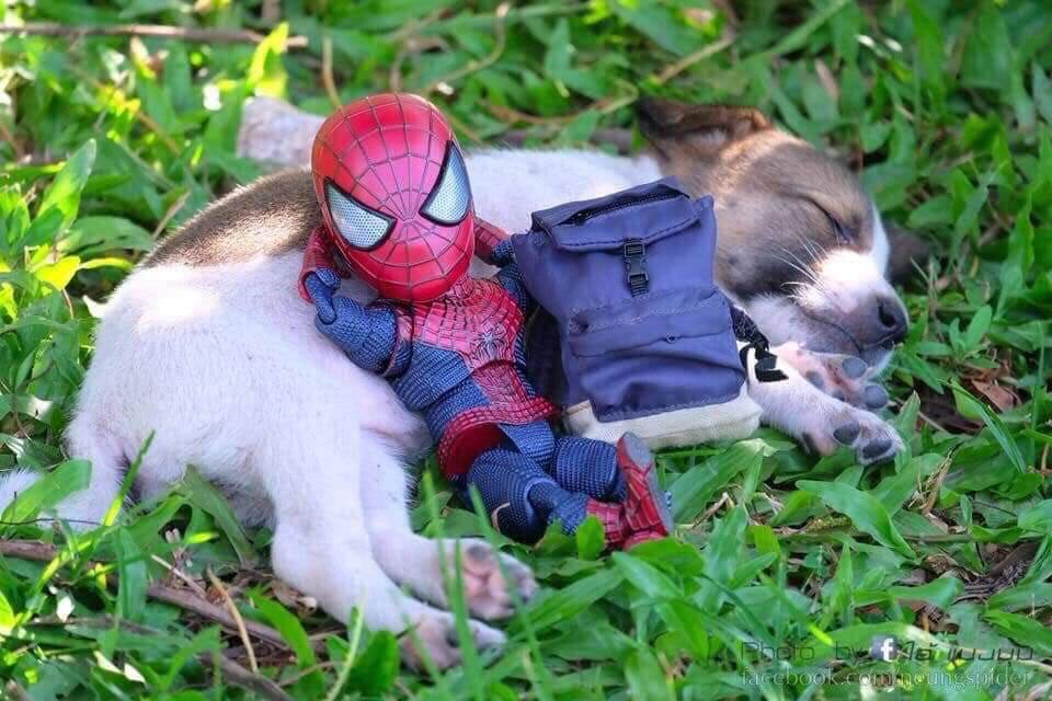 Spider-Man and the cute