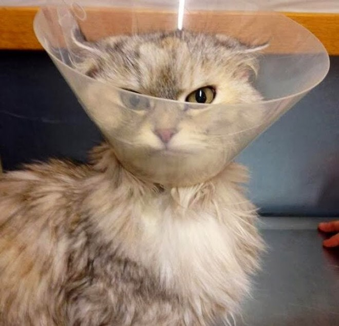 20 adorable pictures of dogs and cats wearing the cone of shame