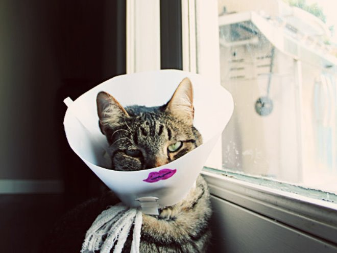 cats wearing the cone of shame