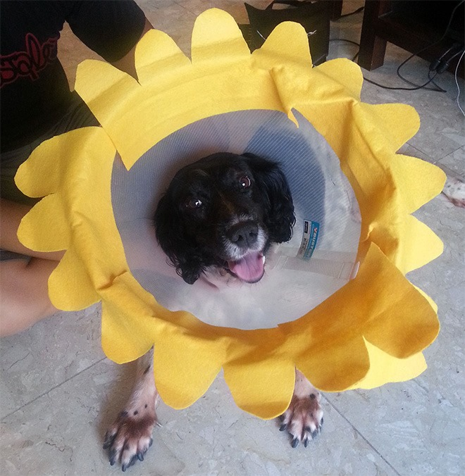 dogs wearing the cone of shame