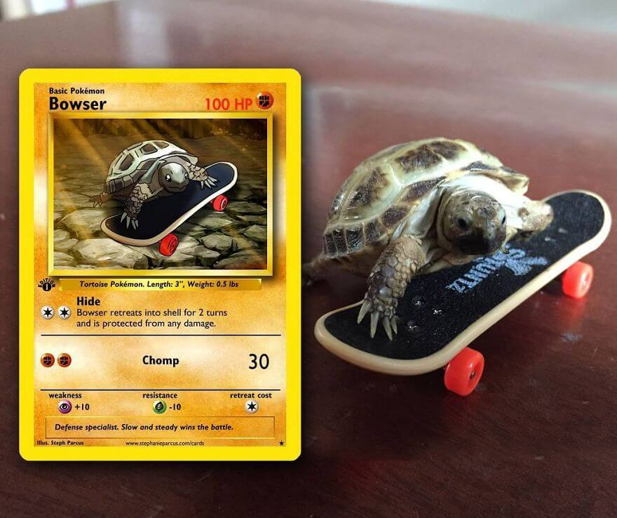 pets become pokemon cards