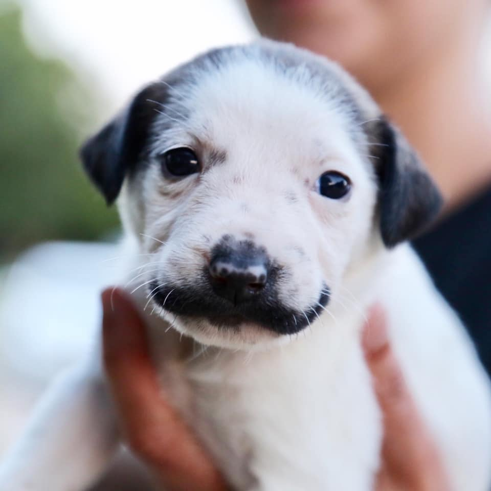 salvador dolly cute shelter puppy